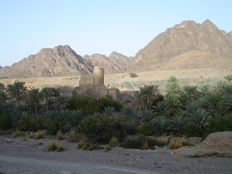 Mts.palms