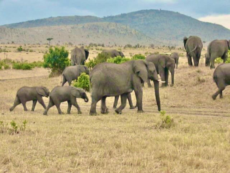 Kenya's Maasai Mara: The People andWildlife